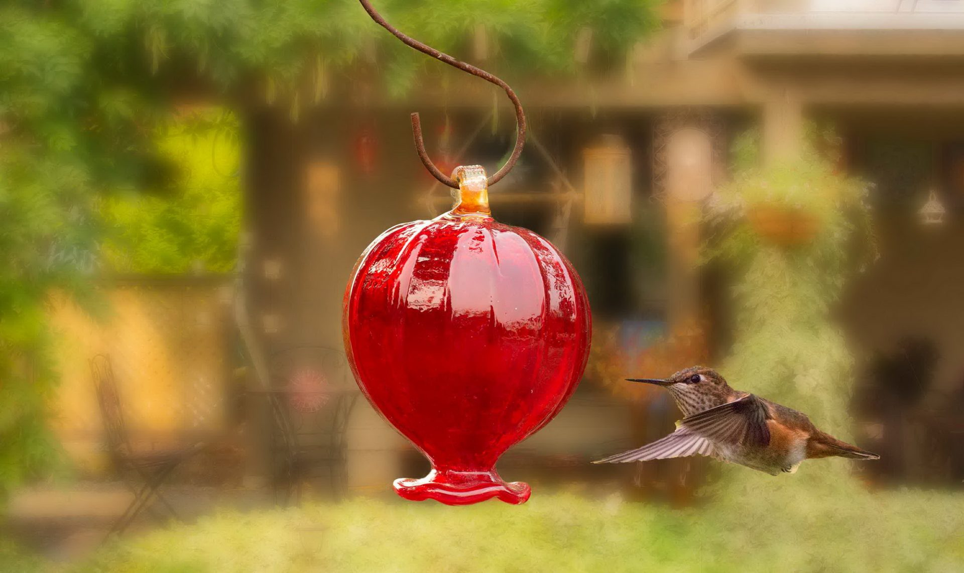 Hummingbird Haven B&B, (c) 2019, hummer-cropped.jpg_resize